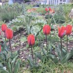 April gardening ideas: spring is here (month five)