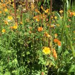 October is a great time to divide perennials