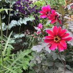 Our NGS open day, this Sunday 1 – 5pm!