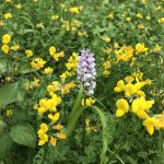 An introduction to native wild orchids the alien wonder beings