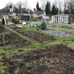 January gardening ideas: mid-winter (month two)