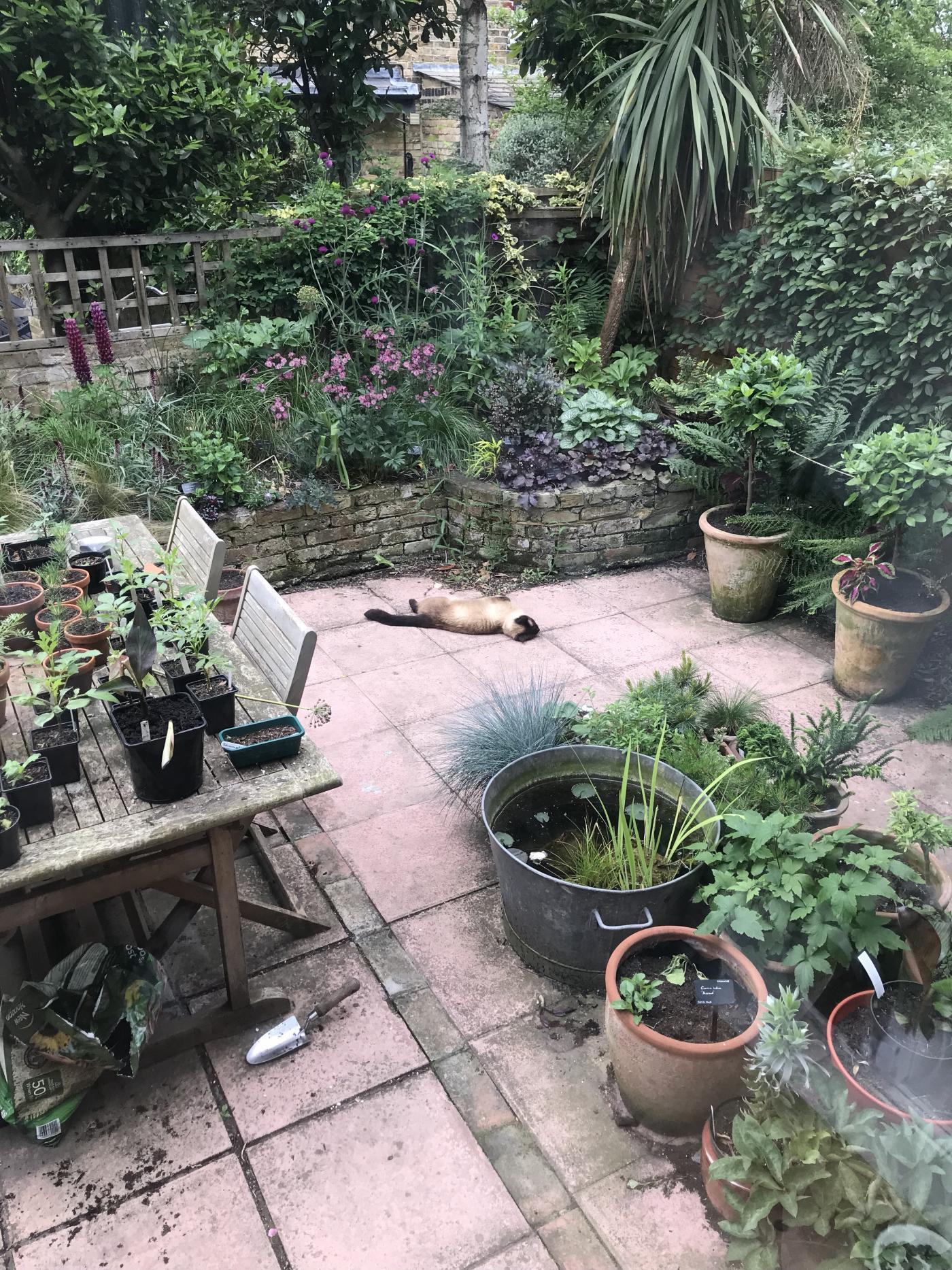 img_5414 - Jack Wallington Garden Design Ltd. - Clapham in ...