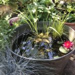 How to make a micro wildlife pond in a pot