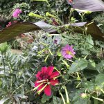 Reflections on another gardening year