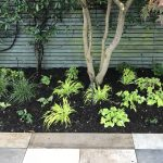 How established should a newly planted garden design be?