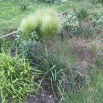Living on a prairie (part 2)