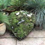 Mossy Rock (part three)