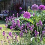 June gardening ideas: summer (month seven)