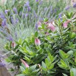 July gardening ideas: mid summer (month eight)