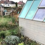 Allotment Month 49: growing up