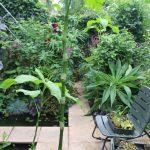 September gardening ideas: end of summer (month ten)