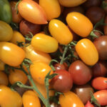 Wild Way Issue 1: Tomatoes