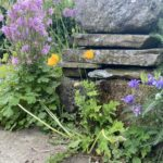 5 steps to a floofy patio that controls weeds organically and permanently
