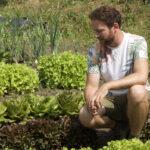 August gardening ideas: high summer (month nine)