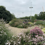 What we can learn from the best urban street plantings